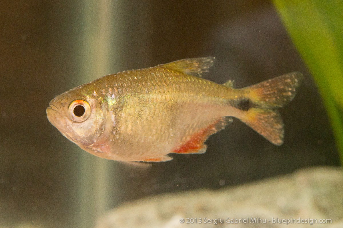 Ich or not appeared overnight tropical fish forums for How to treat ich in fish